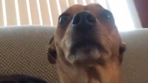 もう動画を撮られすぎて無反応、無表情になってしまった犬。のアイキャッチ