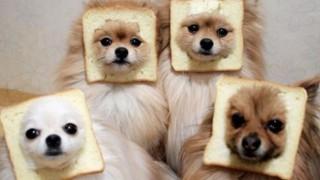 食パンに挟まってしまった犬