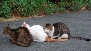 200万頭の猫が殺処分