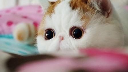 ブサカワ猫といったらこの子!Instagramで大人気の3匹を紹介!のアイキャッチ