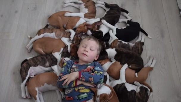 多頭飼いは大変!動画16匹の子犬と戯れる子供♪のアイキャッチ