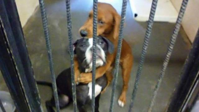 【SNSが犬を救う】殺処分を前日に控え、抱き合う2匹の犬の運命は・・・のアイキャッチ