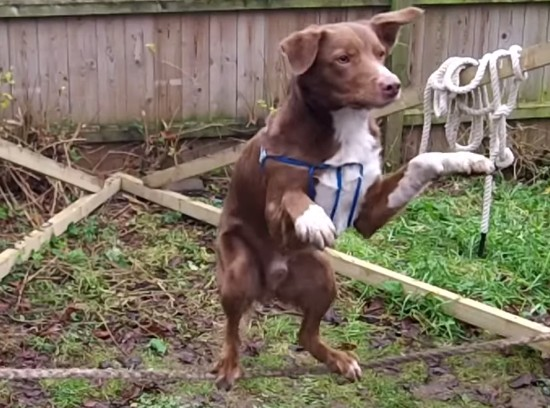 スラックラインで犬が立つ瞬間
