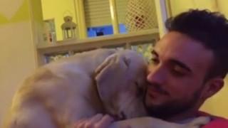 反省する犬