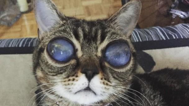 世界で話題の宇宙人猫。巨大な目と神秘的なオーラで世界を魅了する。のアイキャッチ
