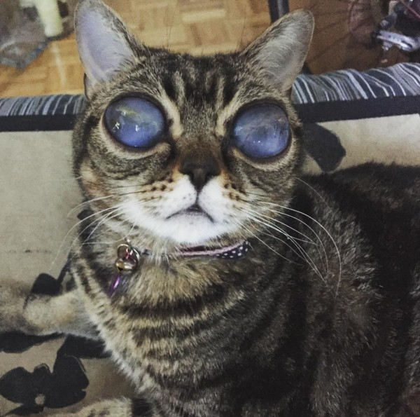 目が大きい宇宙人みたいな猫3