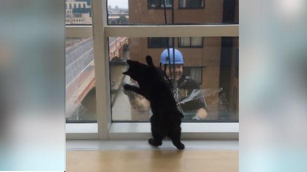 黒猫と窓拭きおじさん。おじさんにつられて猫も拭き拭き♪のアイキャッチ