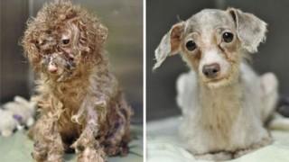 保護犬の劇的変化