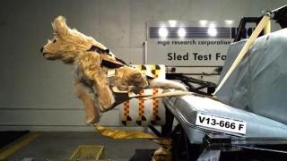 犬と車とテスト