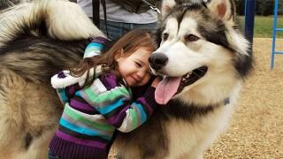 子供の教育と犬