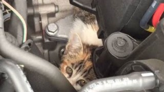 ネコがエンジンに潜む