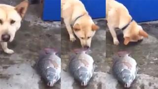 犬が魚に水をかける