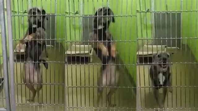 ダンスで新しい飼い主を必死で探す保護犬!SNSで拡散され幸せをつかむのアイキャッチ