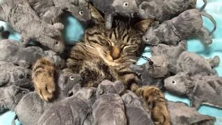 全然起きない猫