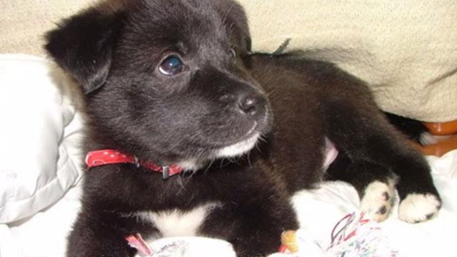 子供たちの決断で殺処分寸前に救われた犬のジャック。大切な6番目の家族にのアイキャッチ