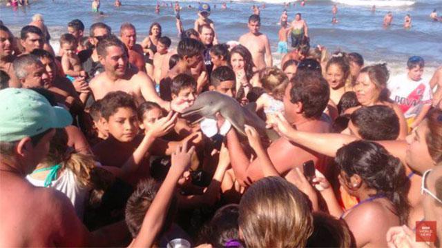 イルカを観光客が海から引き上げ写真撮影→脱水で死亡のアイキャッチ