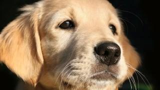 犬の十戒気持ち