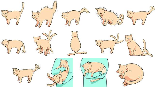 猫の気持ちはしっぽの動きでわかる!14パターン(完全保存版)のアイキャッチ