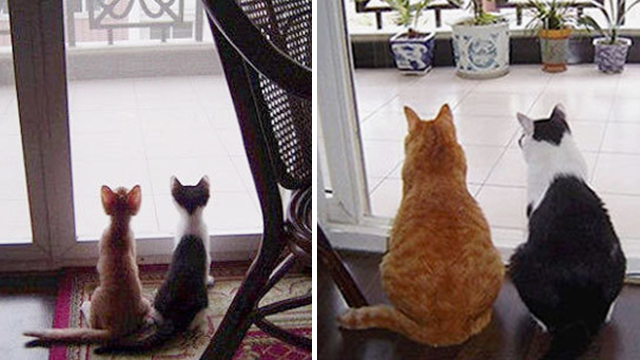 猫の昔と今の比較画像「今も昔も変わらない。変わったのは体格だけ」画像16枚のアイキャッチ