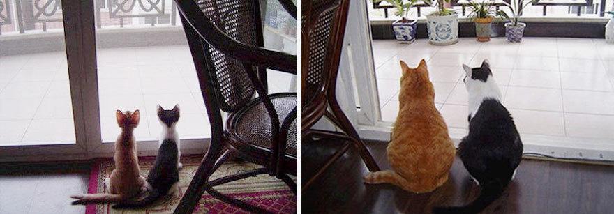 猫の昔と今1