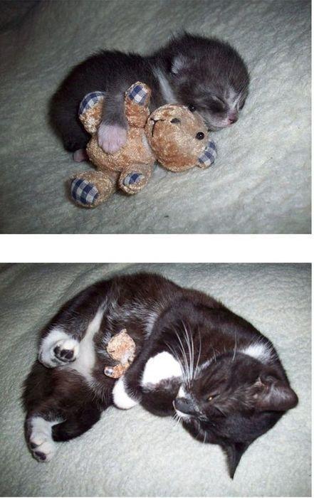 猫の昔と今11