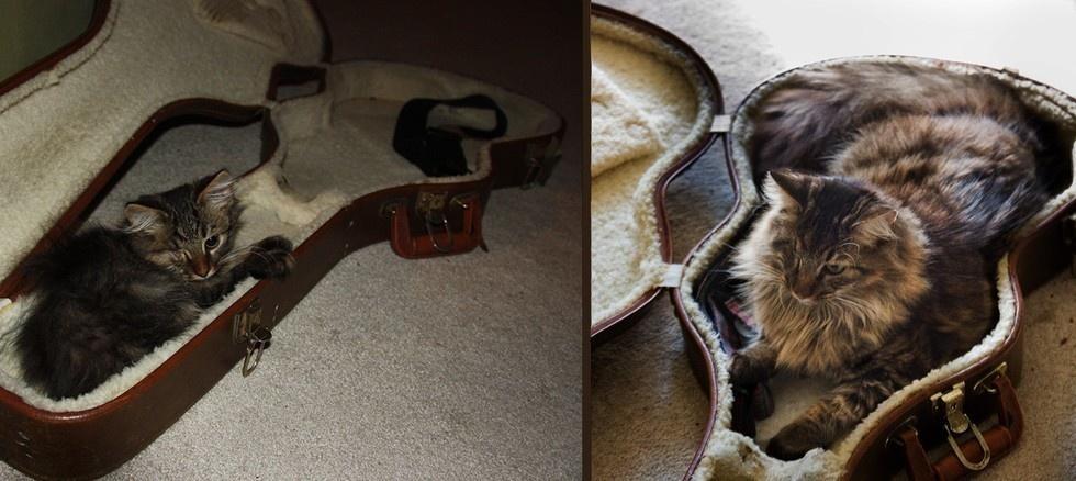 猫の昔と今12