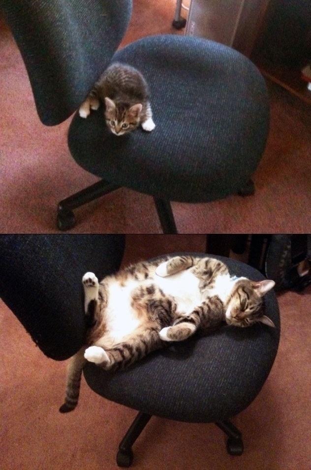猫の昔と今16