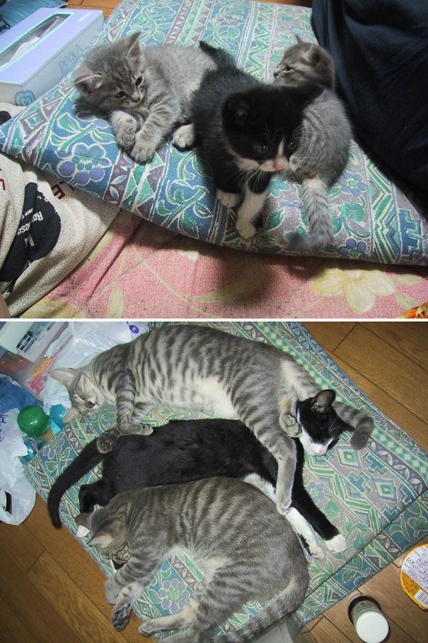 猫の昔と今17