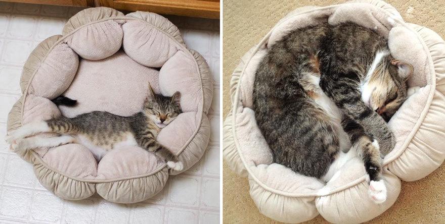 猫の昔と今4