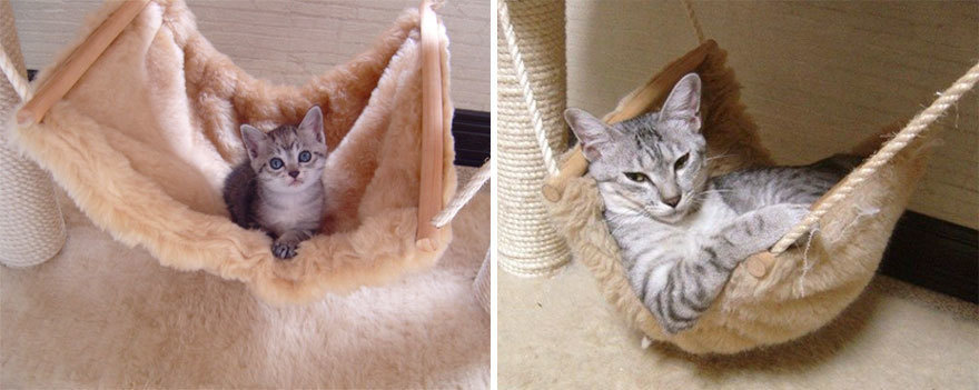 猫の昔と今5