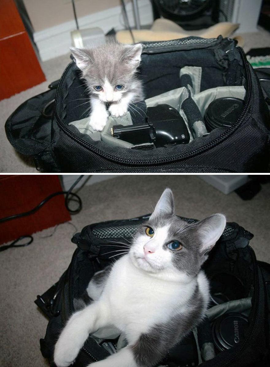 猫の昔と今6
