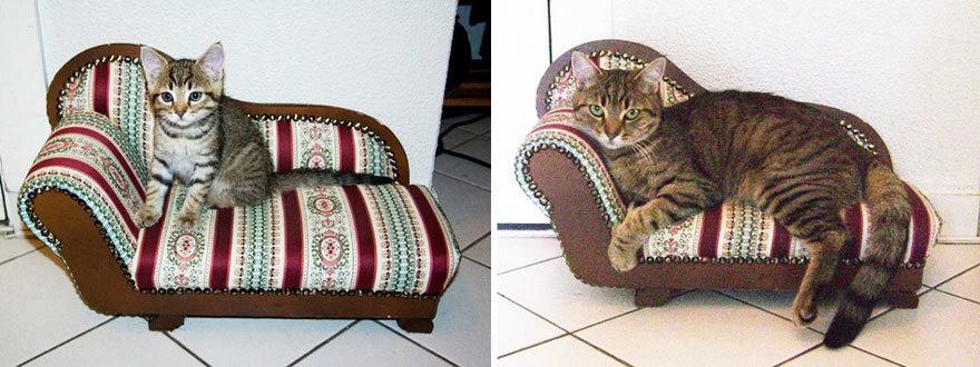 猫の昔と今7