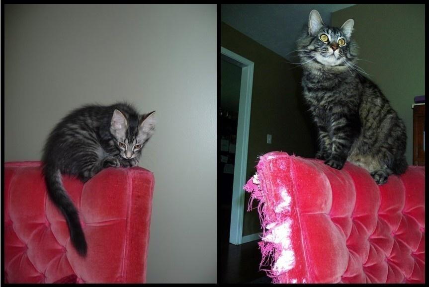 猫の昔と今9