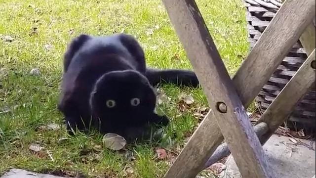 警戒心が強すぎる黒猫。キョロキョロと何度も周囲に注意を向ける姿がおもしろいのアイキャッチ