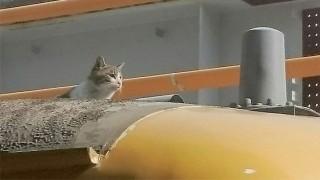 電車の上に猫