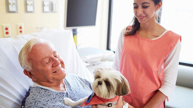 愛犬愛猫が最高の薬に!病院のペット訪問を可能にした結果、患者に回復傾向が見られたのアイキャッチ