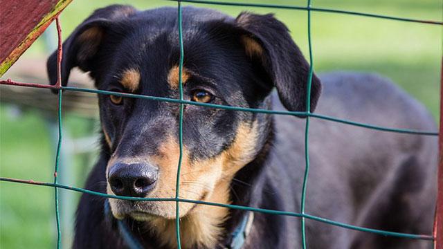 【ドッグフードで寄付】あなたの愛犬への愛情が動物愛護団体への寄付にかわるのアイキャッチ