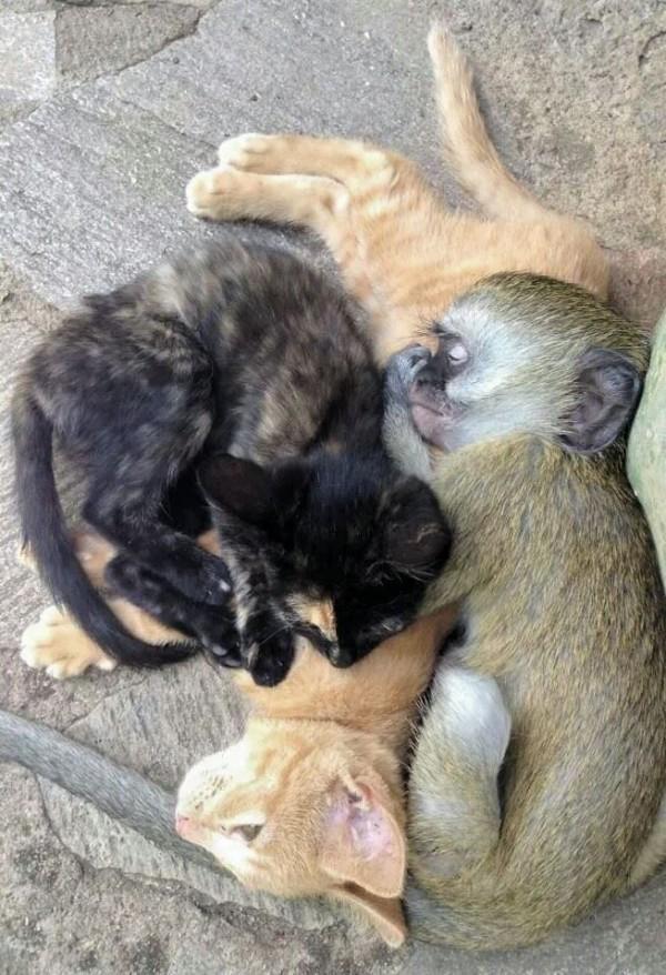 猿と動物4