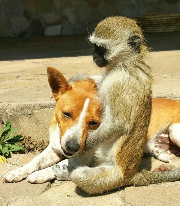 猿と動物5
