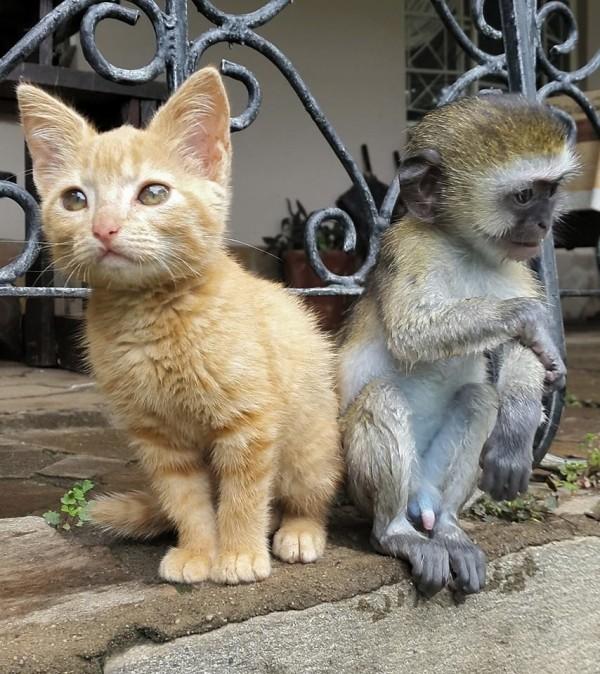 猿と動物6