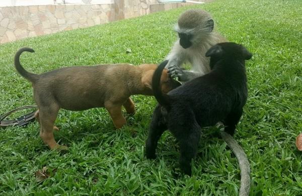 猿と動物3
