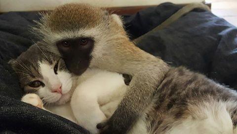 猿と動物1