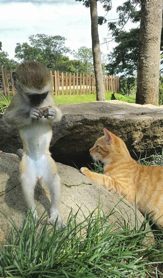 猿と動物8