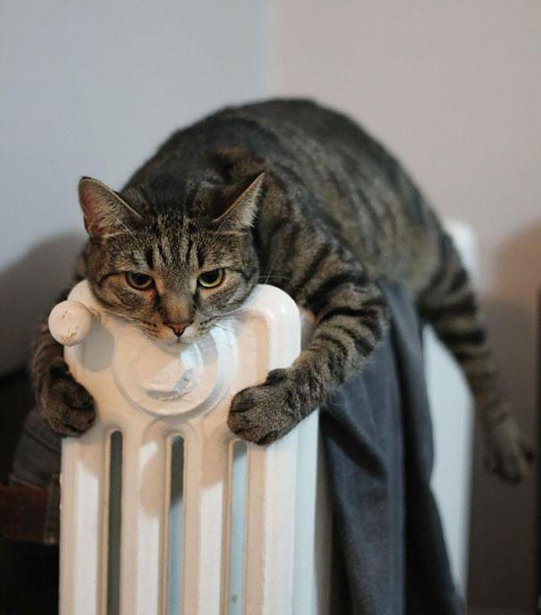 暖かいところが好きな猫4