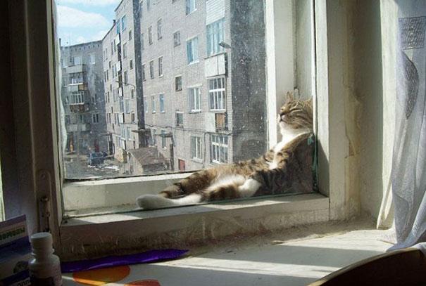 暖かいところが好きな猫5