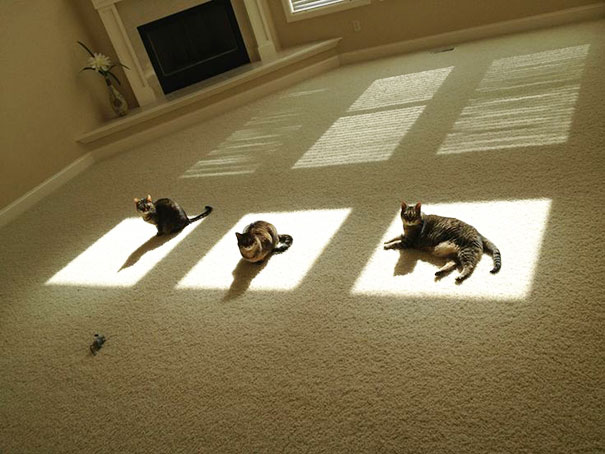 暖かいところが好きな猫6
