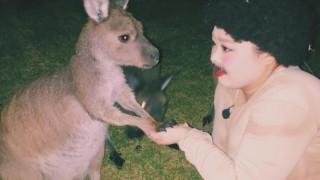 渡辺直美と動物