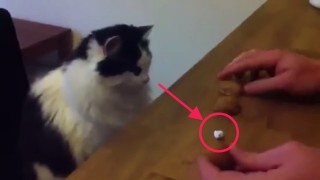猫とマジック