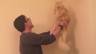 猫を揺らす