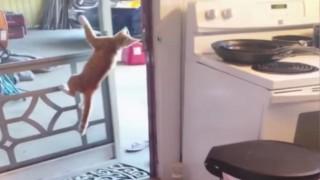 アクロバットなネコ